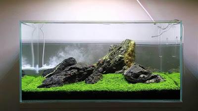 Desain Gambar Aquascape Iwagumi