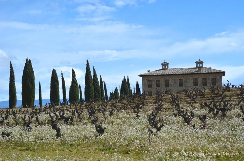 スペインのリオハの葡萄畑の風景