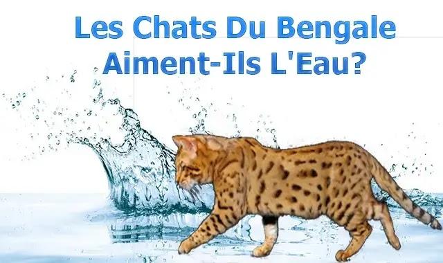Les Chats Du Bengale Aiment-Ils L'Eau?