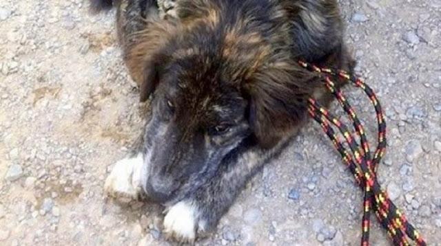 На бензозаправке к паре подошла собака, она легла перед людьми, умоляя о помощи