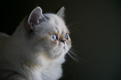 Kediler hakkında ilginç bilgiler Kediler kaç yıl yaşar ? Dünyanın en yaşlı kedisi hangisidir?, Kediler kaç saat uyur?, Kediler nasıl ses çıkarır ? Kedilerin kuyruk sallaması ne anlama gelir ? Kediler kendilerini temizler mi?, Kedi bıyıkları ne işe yarar ?,Kediler ne zaman ve nasıl oyun oynar ? Kedilerde miyav sesi ne alnama gelir ? Kediler ne zaman ve nasıl oyun oynar ?Kediler Catnip(kedi nanesi otu) neden severler ?Kediler nasıl eğitilir? Kedilerin kuyruk sallama anlamları nedir ?