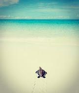 ما لا تعرفه عن جزر المالديف