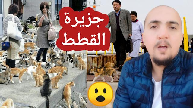 اغرب جزيرة في العالم 😮 جزيرة القطط في اليابان ( القطط تحكم الجزيرة ) أوشيما او جزيرة كات