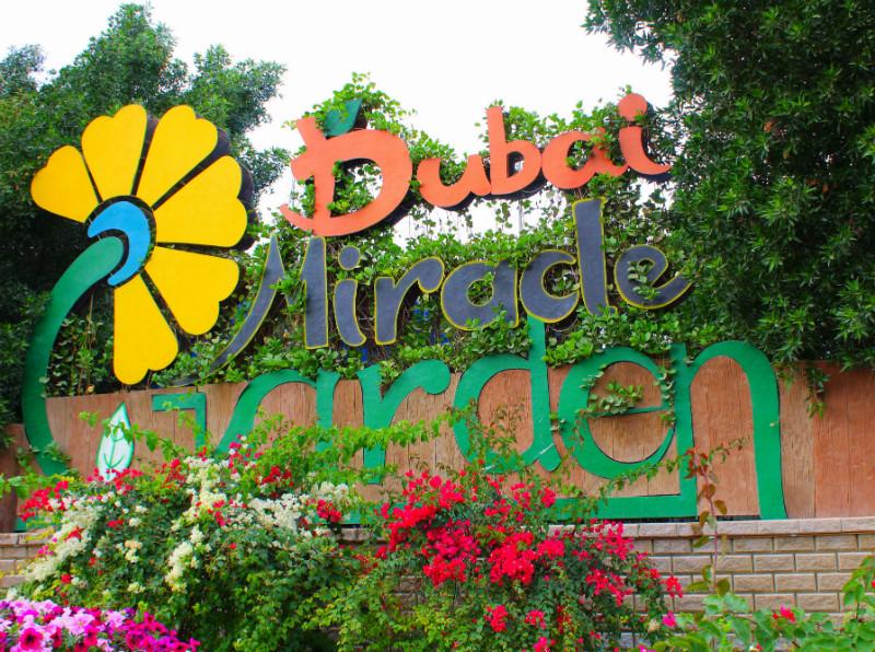 Dubai Miracle Garden Pictures