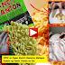 VIRAL VIDEO! OFW Muntik Mamatay Matapos Kumain ng Pancit Canton na may BUBOG Full Video Kumakalat na sa Social Media!