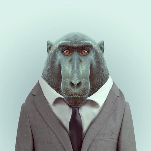 Hilarious Zoo Portraits1