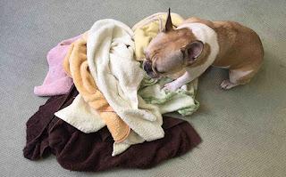 exercícios com toalhas para cães