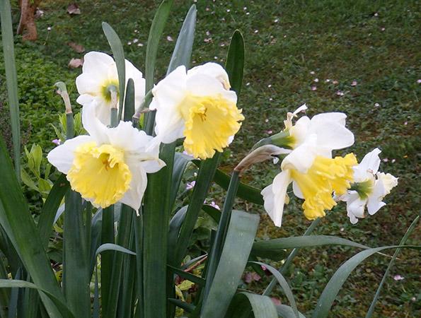 Color en el jard n todo el a o plantas que florecen en marzo for Plantas para rocallas