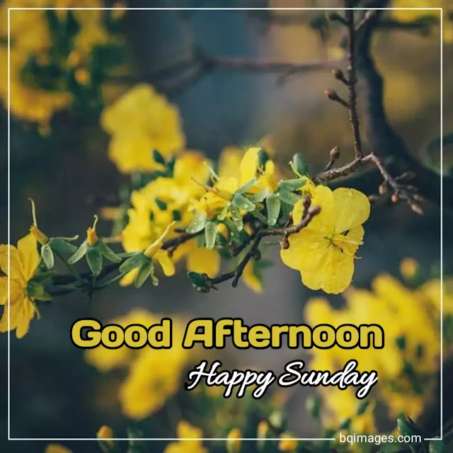 good afternoon happy sunday photos
