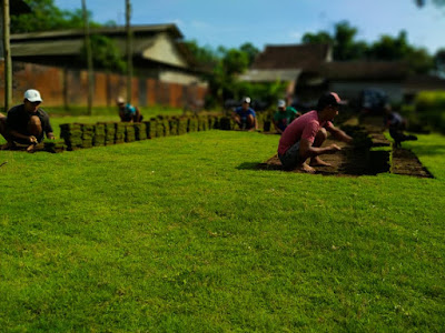 Tukang Taman Surabaya Jual Rumput Jepang Surabaya