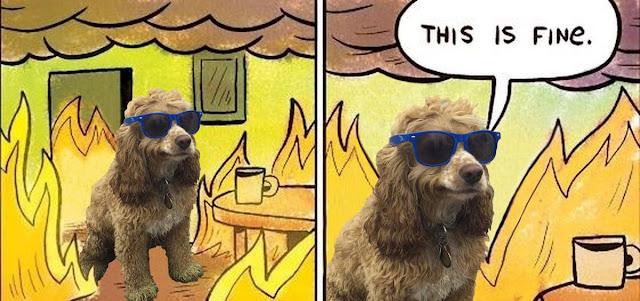 كلب,هادئ ,بارد
