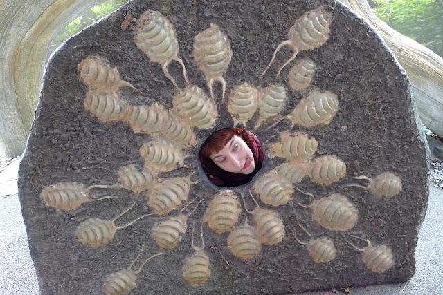 mangé par des insectes