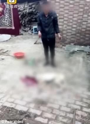 Phẫn nộ gã chủ độc ác đánh chú chó đáng thương đến chết