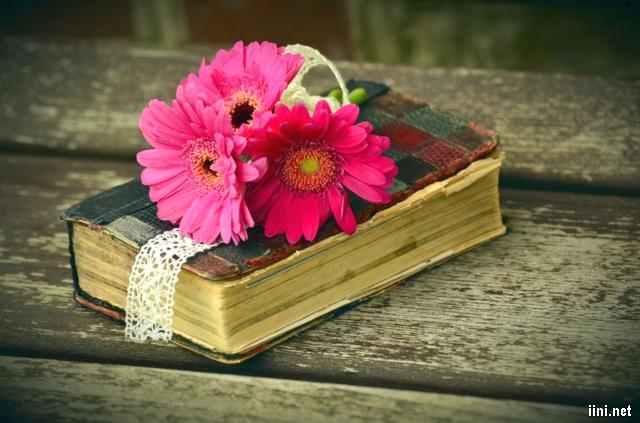 hoa và sách cũ