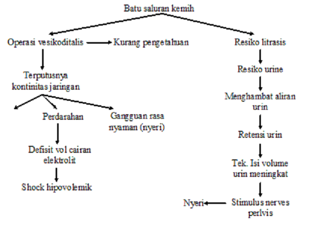 Diet Pada Penyakit Ginjal