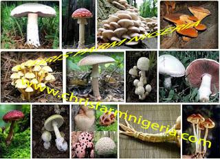 mushroom farm business plan