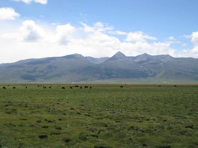 Thảo nguyên Litang
