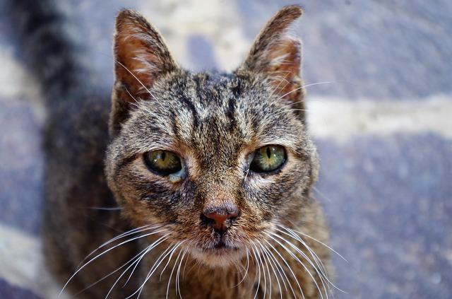 Ciri kucing sakit demam dan cara mengobatinya