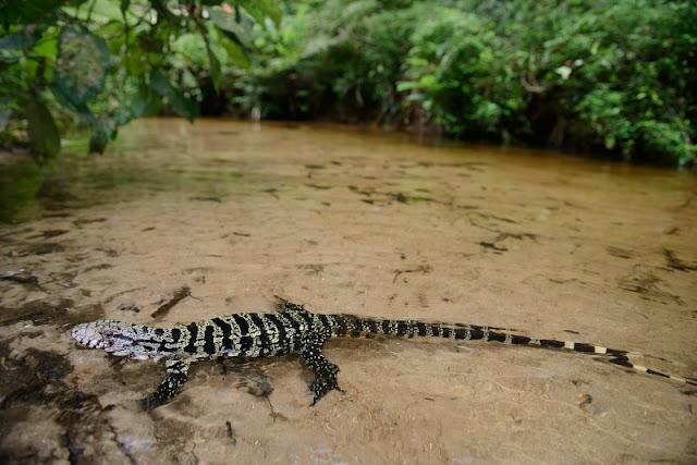 Legado das Águas abriga 13% de toda fauna ameaçada de extinção na Mata Atlântica