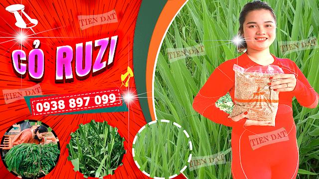 Bảng giá bán hạt giống cỏ ruzi
