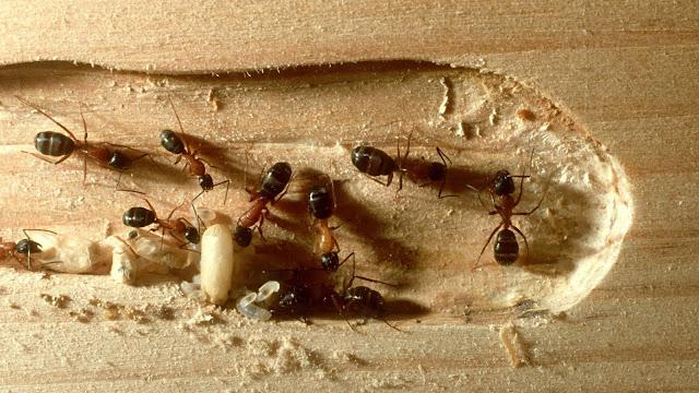ما هي حشرة الرمة