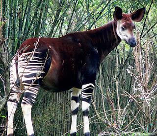 ¿Qué animal está relacionado con las jirafas?