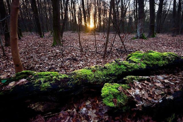 Le Gros Fouteau, Forêt de Fontainebleau.