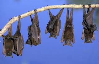 Informasi Menarik Tentang Kelelawar, Mamalia yang Bisa Terbang