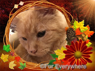 Happy Thanksgiving graphic featuring Carmine.