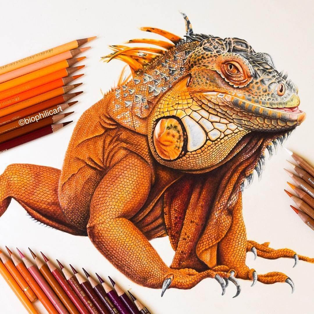 01-Orange-Iguana-Sallyann-Brightly-Colored-Animal-Pencil-Drawings-www-designstack-co