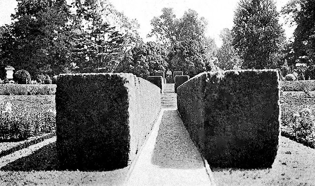 1915 topiary hedges