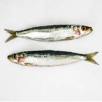 तरली, पेडवे मासा, Sardines fish name in Marathi
