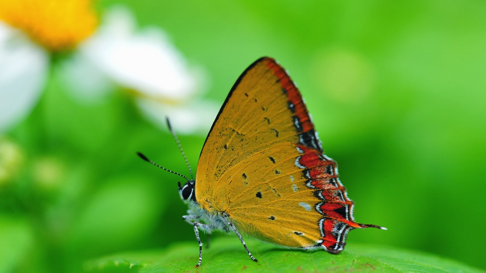 yellow butterfly wallpaper free - photo #1