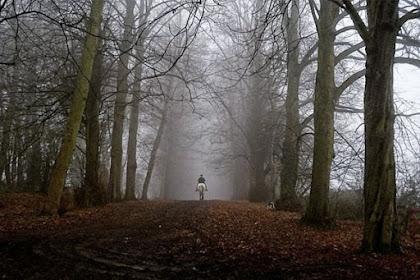 Hantu Lokal Sudah Terlalu Mainstream, Ini Daftar Hutan Paling Berhantu di Inggris