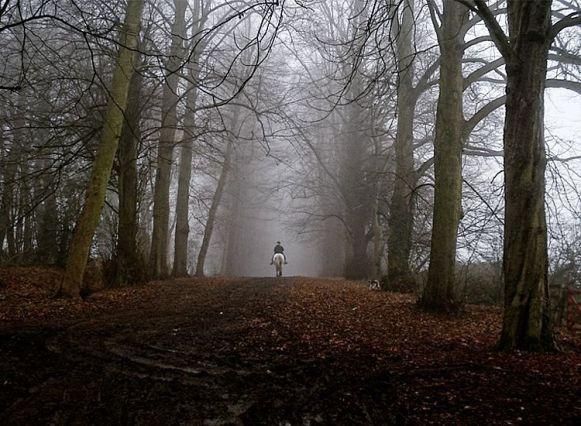 7 Hutan Paling Berhantu di Inggris