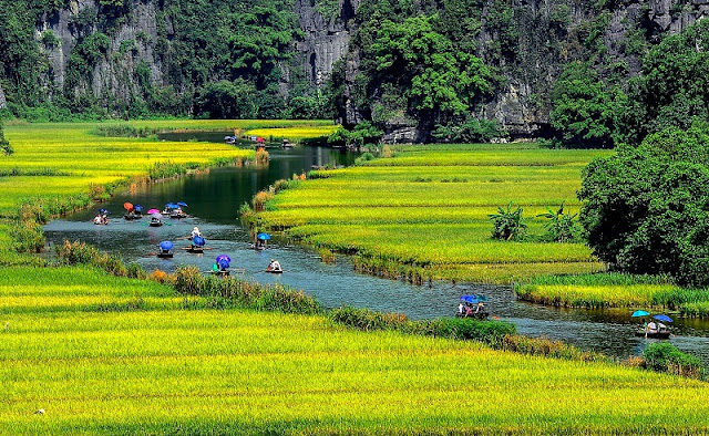 Surprised by the picturesque rice fields look like pictures in Tam Coc 1