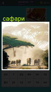 показано сафари, где бродят стадо слонов 19 уровень 667 слов
