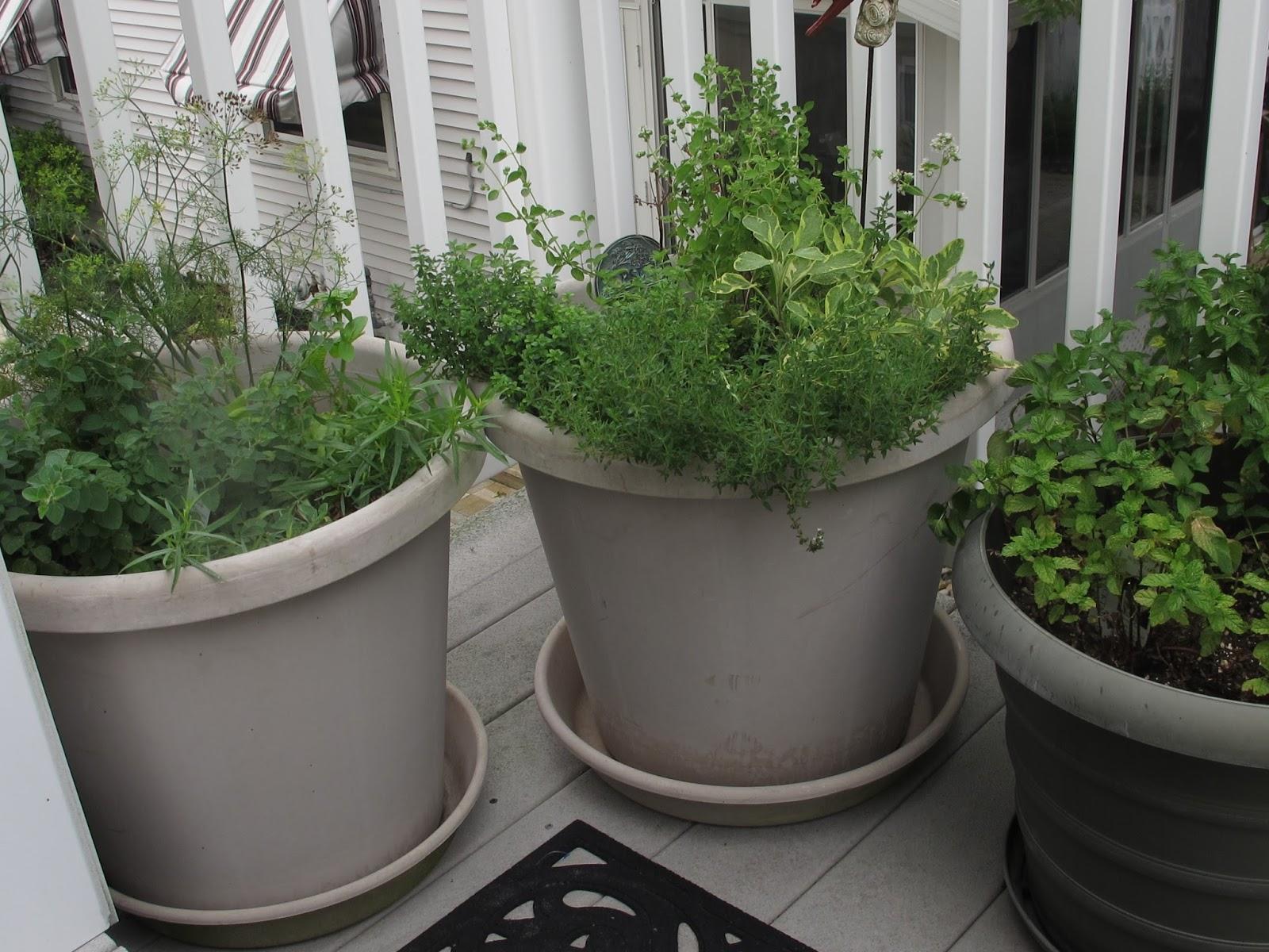 Gardeners Kitchen Penn State Extension Philadelphia Master Gardeners Kitchen Herb