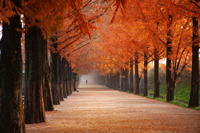 A pathway with trees on an autumn day.