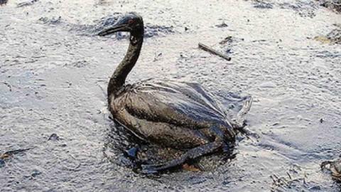 minyak bumi yeng mencemari perairan berbahaya bagi hewan
