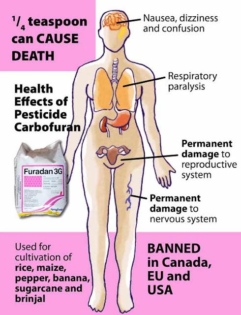Gambar di bawah ini memberikan kesan sisabaki racun furadan.
