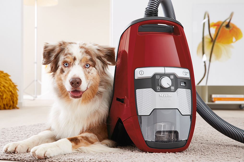 miele cat and dog or dyson