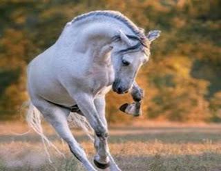 सपने में घोडा देखना | sapne mein ghoda dekhna