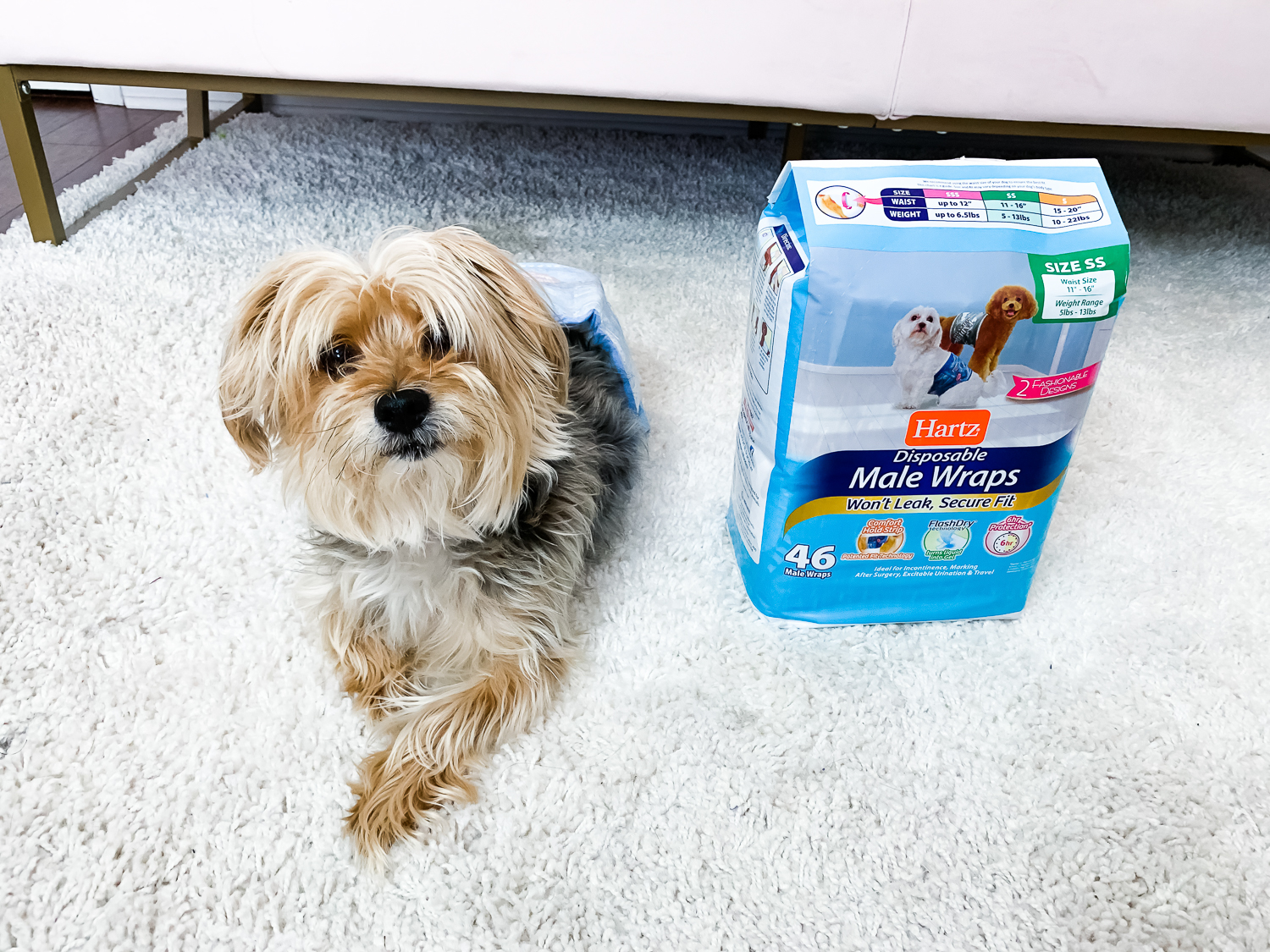 Tips To Prevent Your Dog From Peeing In The House - Chasing Cinderella