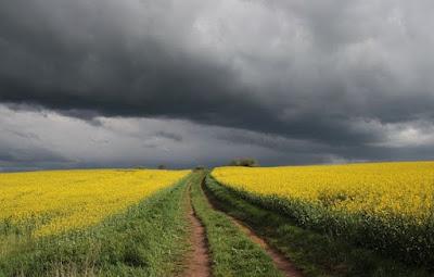 خسائر,بالملايين,تتكبدها,الزراعة,في,النمسا,بسبب,العواصف