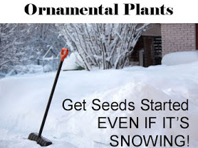 How to Winter Sow Seeds - a Video