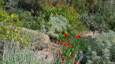 Sparoza Garden, un jardín mediterráneo experimental a las afueras de Atenas