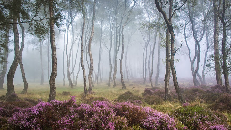 omorfos-kosmos.gr - 15 Μυστηριώδη δάση, στα οποία θα ήθελες να χαθείς... (Εικόνες)