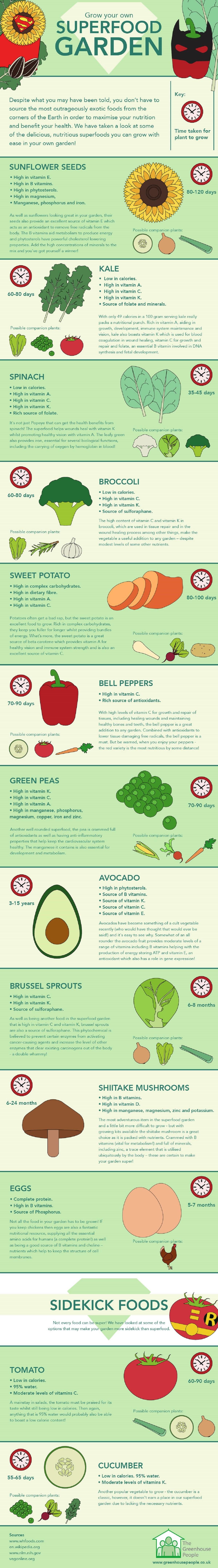 superfood-garden-infographic