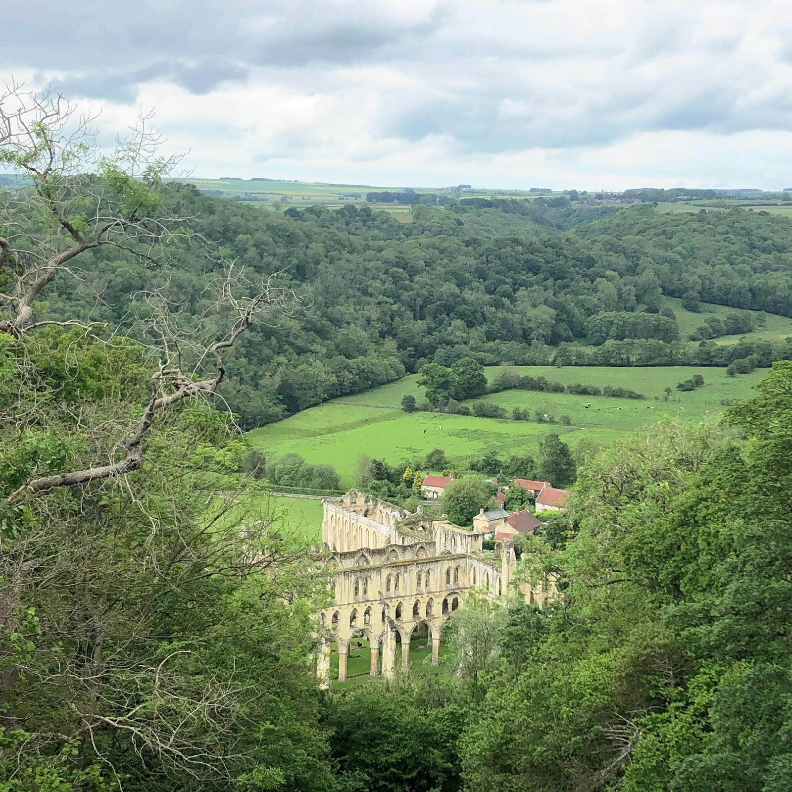 June Days - Rievaulx-Terrace